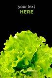 Ensalada verde fresca Foto de archivo