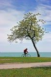 ensam övergående tree för cykel Fotografering för Bildbyråer