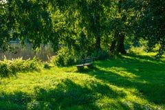 Ensam bänk i frodig gräsplan på sjön med träd arkivfoto