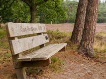 Ensam bänk i holländsk heathland Royaltyfri Fotografi