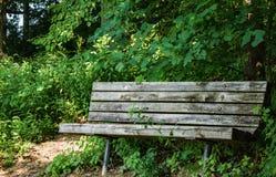 Ensam bänk i trädgården royaltyfri fotografi