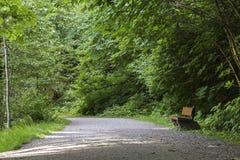 Ensam bänk på en Forest Path Royaltyfri Fotografi