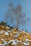 Ensam björk som växer på ett brant stup mot en blå himmel royaltyfri foto