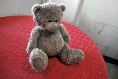 ensam björn Arkivfoto
