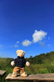ensam björn Royaltyfria Foton