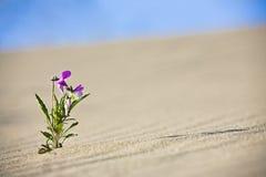 ensam blomma Arkivbild