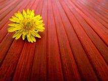 Ensam blomma Royaltyfria Foton
