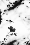 ensam blomma royaltyfria bilder