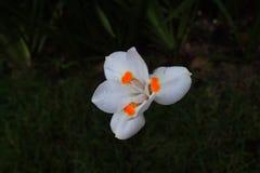 ensam blomma Arkivfoton
