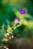 ensam blomma arkivbilder