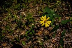 ensam blomma Royaltyfri Fotografi