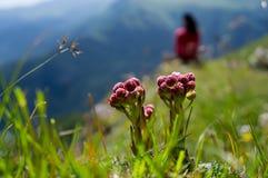 Ensam blomma två Arkivbild