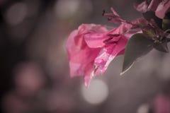 Ensam blomning Arkivfoto