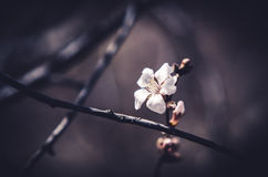 Ensam blomning Arkivfoton