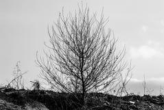 Ensam buske i ett öde område i BW royaltyfri bild