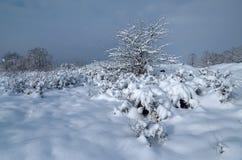 Ensam buske i snön mot den blåa himlen Vykortsikter Arkivbild