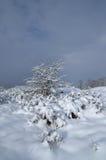 Ensam buske i snön mot den blåa himlen Vykortsikter Royaltyfri Foto