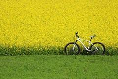 Ensam cykel Fotografering för Bildbyråer
