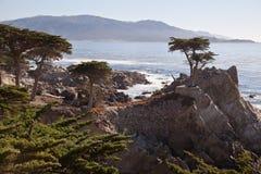Ensam cypress, Carmel, Kalifornien Arkivfoto