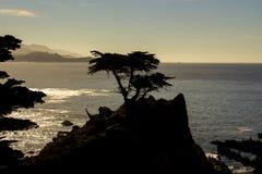 Ensam cypress, 17 mil drev Royaltyfri Foto