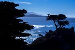 Ensam cypress, 17 mil drev Royaltyfria Foton