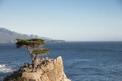 Ensam cypress - 17 mil drev Kalifornien Royaltyfri Foto