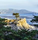 Ensam cypress på 17en-Miles-Drive i Kalifornien Royaltyfri Foto