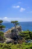 Ensam cypress, Pebble Beach Royaltyfri Foto