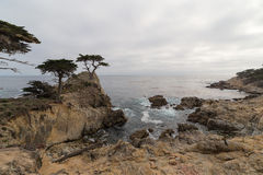 Ensam cypress, Pebble Beach, Kalifornien Royaltyfria Bilder