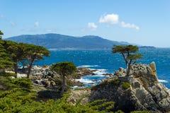 Ensam cypress, spårvagnsförare och Monterey, Kalifornien, USA arkivfoto