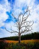 Ensam död Tree på huvudvägen Arkivbild