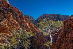 Ensam eukalyptusträdStandley svalg, Larapinta slinga Arkivfoto