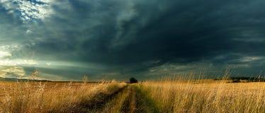 ensam fält Arkivfoton