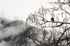 Ensam fågel Arkivfoto