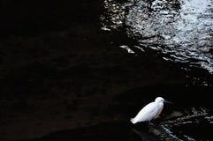 Ensam fågel Arkivbild