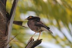 Ensam fågel Royaltyfri Bild