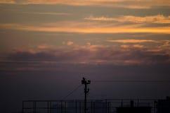 Ensam fågel i solnedgången royaltyfria foton