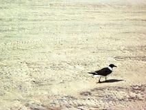 Ensam fågel på stranden Royaltyfri Bild