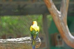 Ensam fågel, solconure royaltyfria bilder
