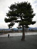 Ensam flicka med det ensamma trädet arkivbilder