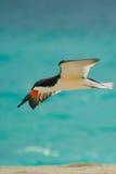 ensam flyg Royaltyfri Fotografi