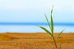 Ensam grodd av gräs Royaltyfri Foto