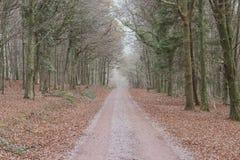 Ensam grusväg som kör till och med en tät skog arkivfoton