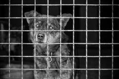 Ensam gullig hund som ser till och med buren Fritt avst?nd f?r text svart white bw royaltyfri fotografi