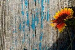 Ensam härlig blomma på ett gammalt träbräde Arkivfoton