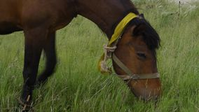 Ensam härlig brun häst i den gröna ängen, slut upp arkivfilmer