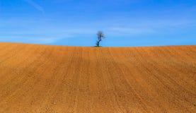 ensam härlig tree för solnedgång för sommar för fältgreenliggande Fotografering för Bildbyråer