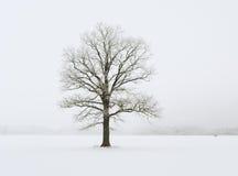 ensam härlig tree för solnedgång för sommar för fältgreenliggande Arkivbild