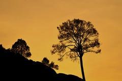 ensam härlig tree för solnedgång för sommar för fältgreenliggande Royaltyfria Foton