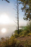 ensam härlig tree för solnedgång för sommar för fältgreenliggande Royaltyfri Bild